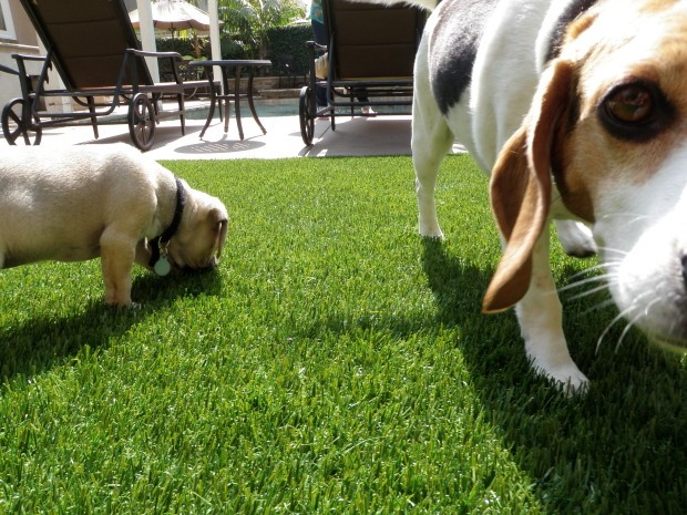 Synthetic Pet Turf Company Solana Beach, Artificial Pet Grass Backyard Installation