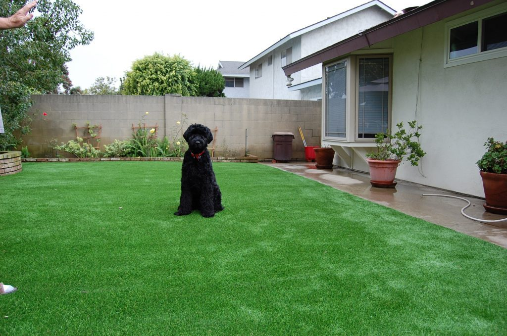 Synthetic Lawn Pet Turf Solana Beach, Top Rated Artificial Grass Installation for Dogs