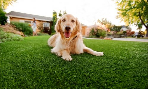 Synthetic Grass For Dogs Solana Beach, Artificial Lawn Dog Run Installation