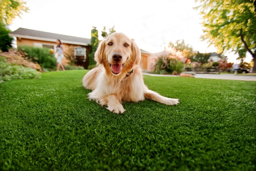 Synthetic Grass For Dogs Solana Beach,